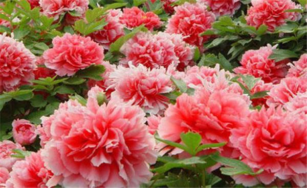 只在夏天开的有哪些花