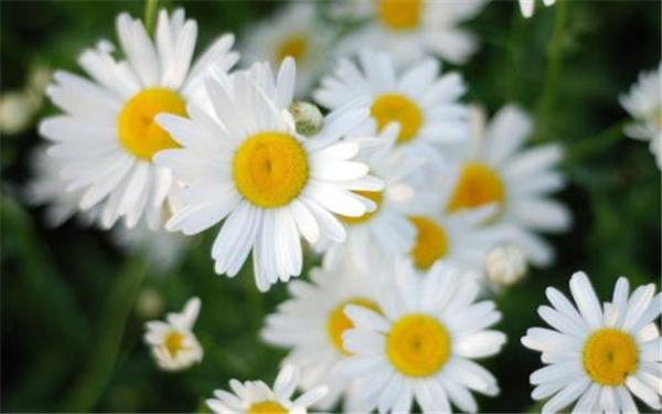 秋天各个花的特点是什么