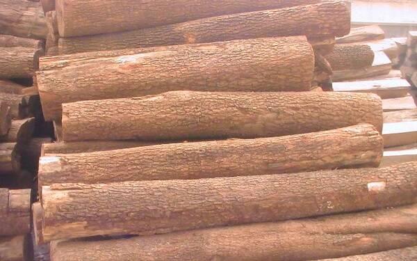 檀香木多少钱一公斤 市场行情怎么样