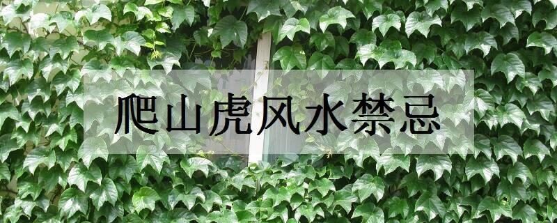 阳台种植爬山虎_爬山虎风水禁忌有哪些_植物博士