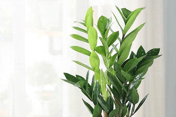 卧室放什么植物最旺财