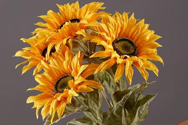 送朋友什么花代表友谊
