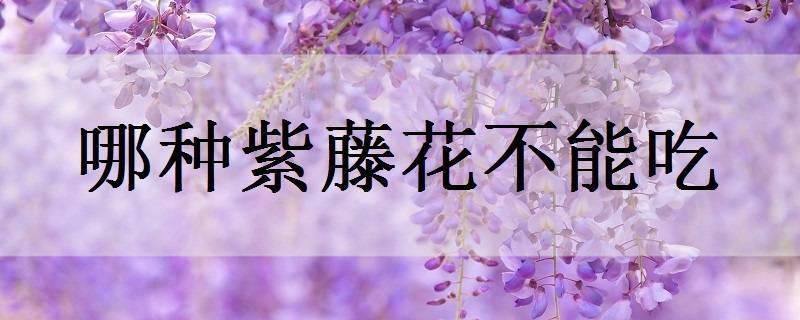哪种紫藤花不能吃