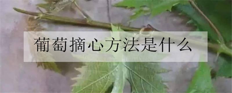 葡萄摘心方法是什么