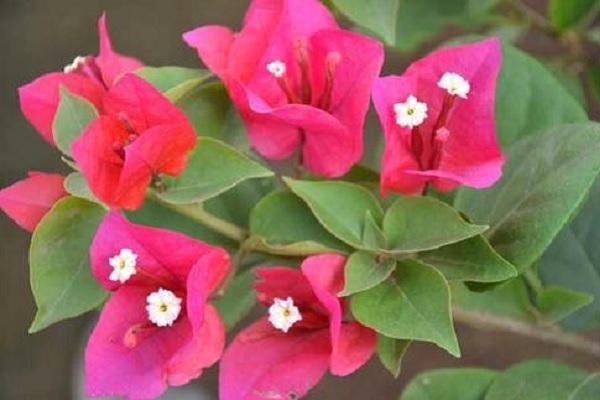 有花香的木本植物 什么木本开的花香