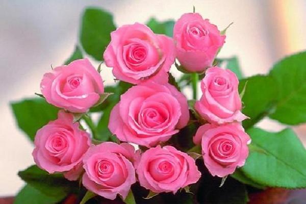 教师节送什么颜色的玫瑰花 如何搭配寓意好