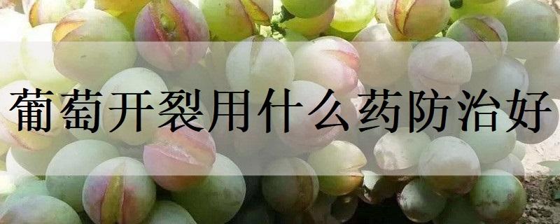 葡萄开裂用什么药防治好