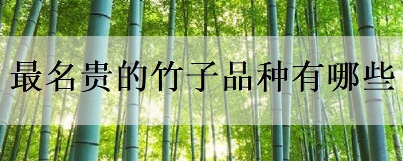 最名贵的竹子品种有哪些
