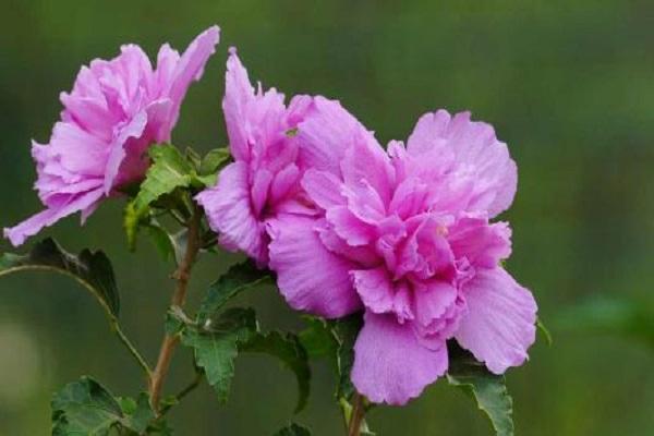 常见的四季开花的木本花卉有哪些
