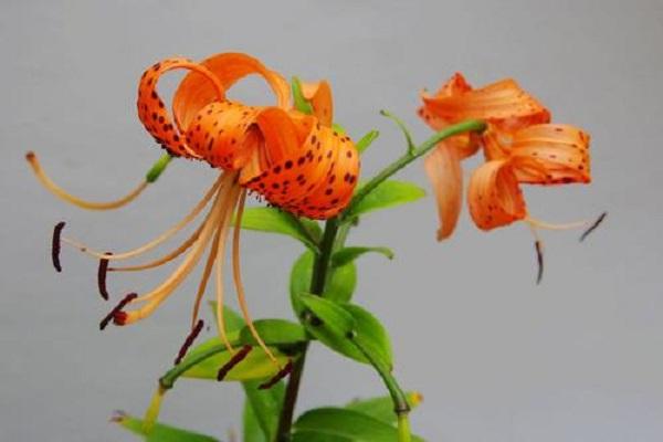 网上买花卉哪个网站好 需要做好哪些准备