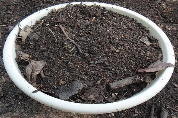 怎样制作花卉营养土 花卉缺铁怎么办