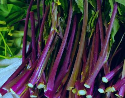 种植红菜苔需要掌握的高产技巧有哪些 红菜苔怎么养护