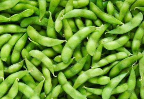 如何预防毛豆早衰 早衰的原因是什么